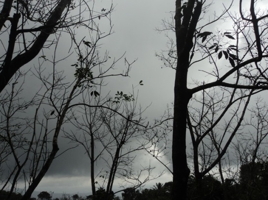 When the dark clouds arrive, trees are ready with silhouette.