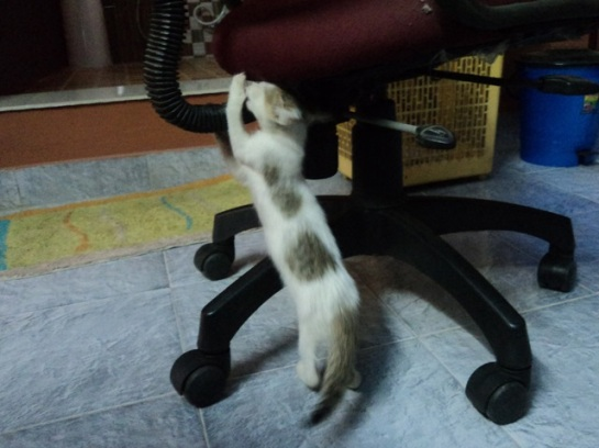 I am the Elastic Kitty. See how far I can stretch. And see, only two legs :D