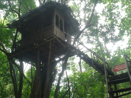 The presence of a tree-house makes things special all the time.